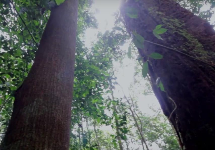 Flora and Fauna Diversity at Prof. Sumitro Djojohadikusumo Conservation Area (AK – PSD) ARSARI
